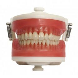Manequim Top  Dentística PD100 - Pronew