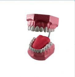 Macro Modelo Arcada Dentária  - Odontomar